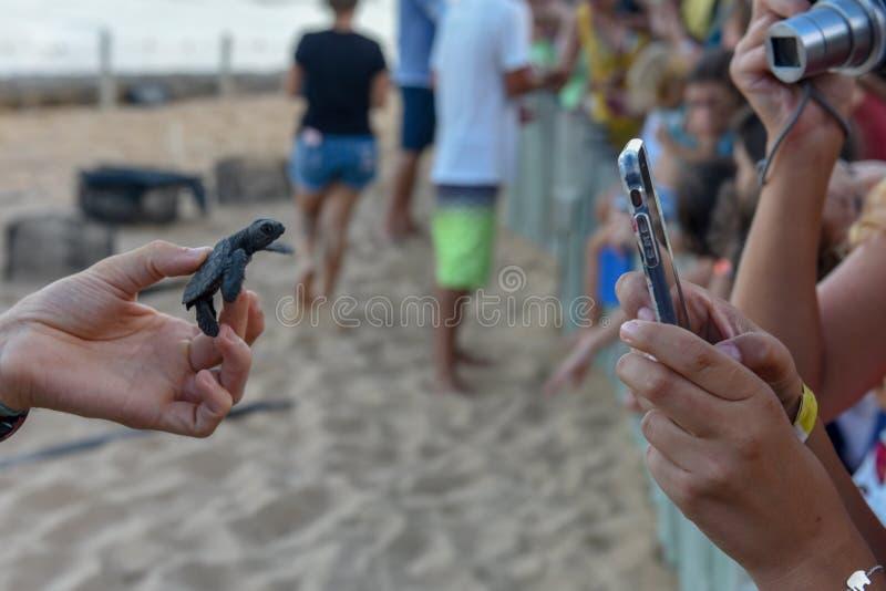 Mensen die babyschildpadden op Tamar-project in Praia do Forte in Brazili? waarnemen stock afbeeldingen