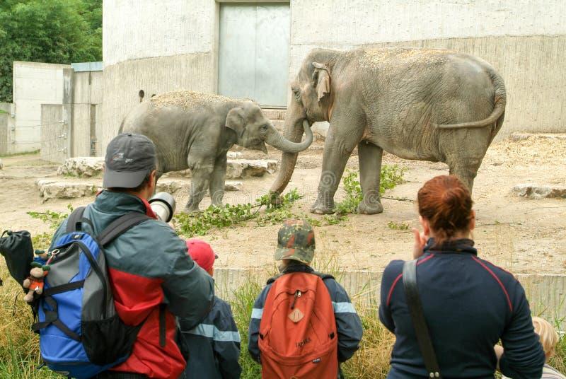Mensen die de olifanten in de Dierentuin Zürich waarnemen royalty-vrije stock foto's