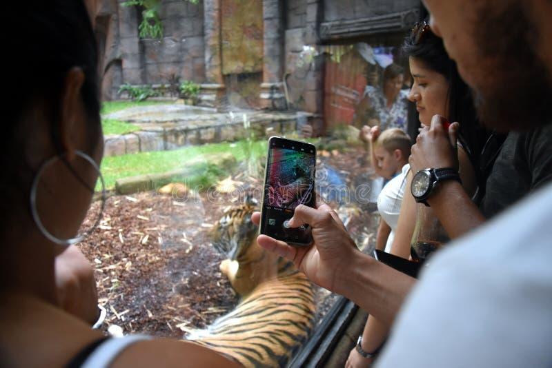 Mensen die en op foto van een Sumatran-tijger letten nemen royalty-vrije stock afbeelding