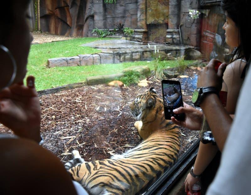Mensen die en op foto van een Sumatran-tijger letten nemen royalty-vrije stock foto