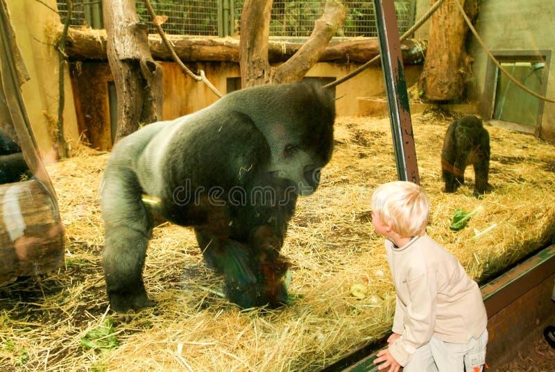 Mensen die gorilla's in de Dierentuin Zürich op Zwitserland waarnemen royalty-vrije stock foto