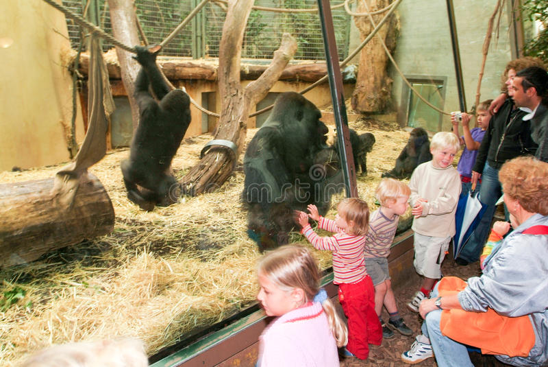 Mensen die gorilla's in de Dierentuin Zürich op Zwitserland waarnemen stock afbeelding
