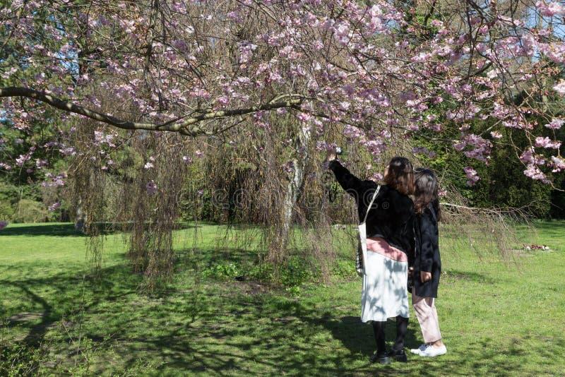 Mensen die kersen van bloesems op Bispebjerg-kerkhof genieten royalty-vrije stock fotografie