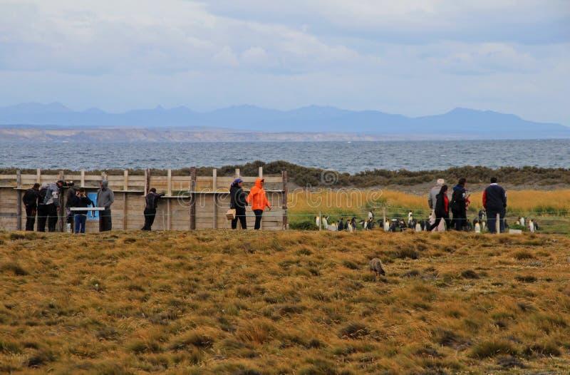 Mensen die op de Koningspinguïnen het leven wildernis letten in Parque Pinguino Rey, Patagonië, Chili royalty-vrije stock afbeelding