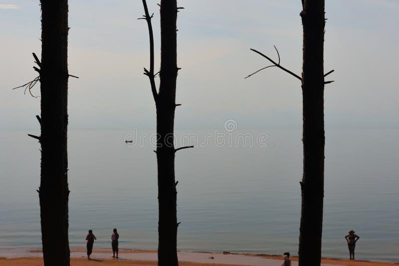 Mensen die op het strand dichtbij de pijnboombomen zonnebaden stock afbeelding