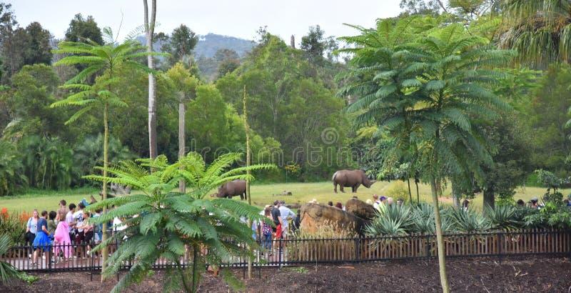 Mensen die op Zuidelijke witte rinoceros letten royalty-vrije stock afbeeldingen