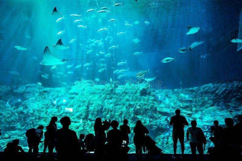 Mensen die vissen achter een reusachtig glas in aquarium waarnemen royalty-vrije stock fotografie