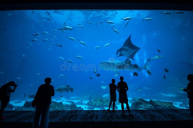 Mensen die vissen waarnemen bij aquarium 3 stock afbeeldingen