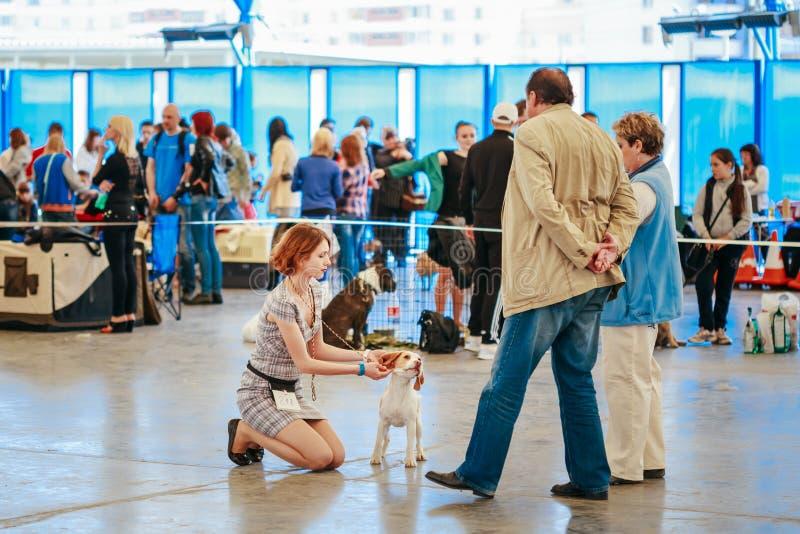 Mensen en hondenbezoektentoonstelling - de Internationale hond toont, voert in royalty-vrije stock afbeelding