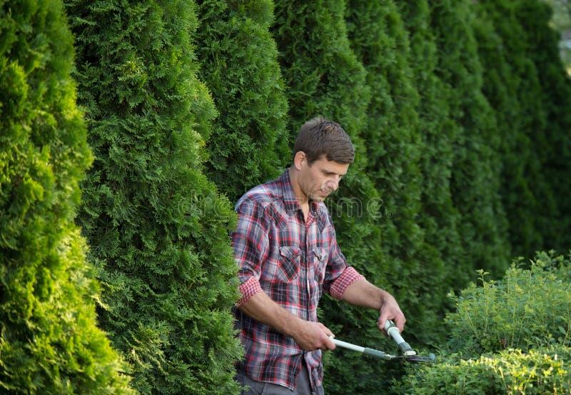 Mensen in orde makende struiken in tuin stock foto's