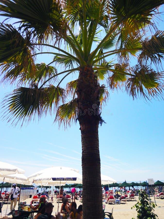 Mensen, palm, strand stock afbeeldingen