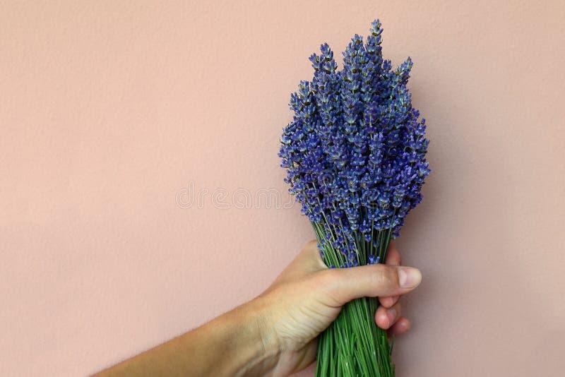Mensen` s hand die een boeket van lavendel houden tegen een roze muurachtergrond De ruimte van het exemplaar stock afbeelding