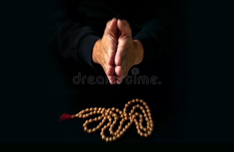 Mensen` s hand die een rozentuin houden stock afbeeldingen