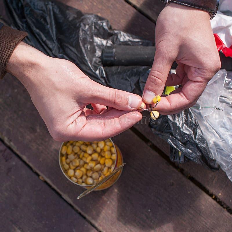 Mensen` s handen die gezet aas bij de visserij van haak proberen stock foto