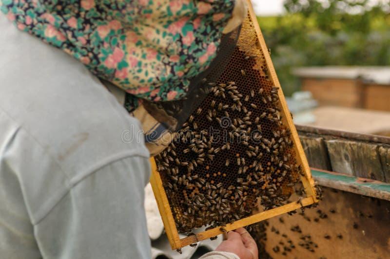 In mensen` s handen een kader met honing stock afbeeldingen