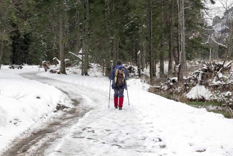 Mensengangen door het de winterbos stock afbeelding