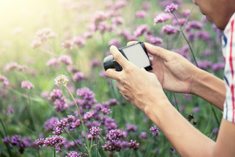 Mensenhand die foto met compacte camera in de bloemtuin nemen stock afbeeldingen