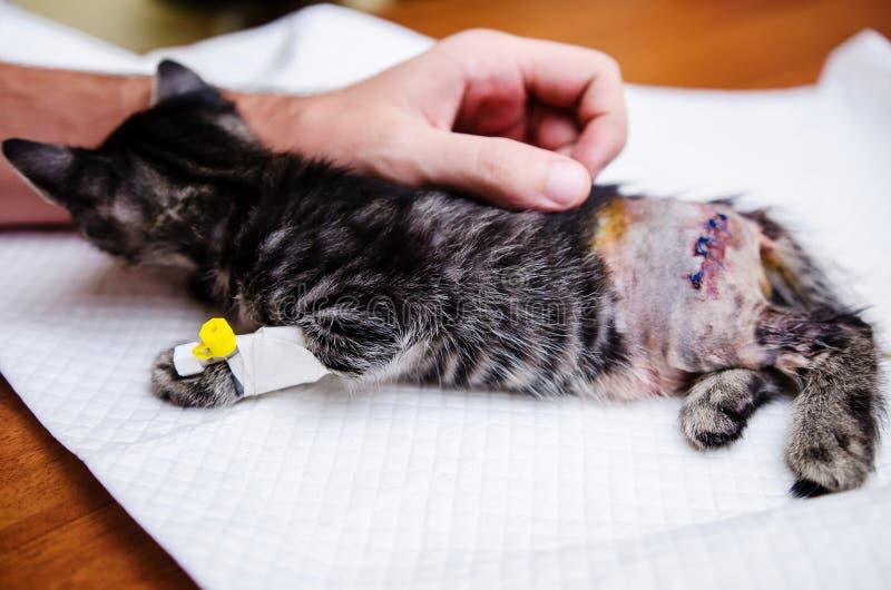 Mensenhand die kleine kat na chirurgie conforting stock foto