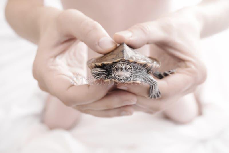 Mensenhanden die Schildpad houden Selectieve nadruk stock afbeelding