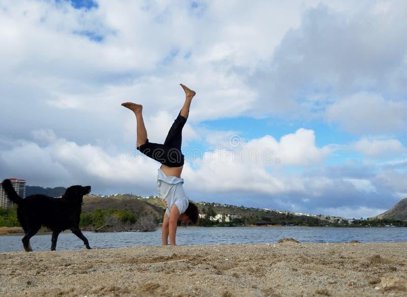 Mensenhandstanden op strand met zwarte hond naast hem in Hawaï Kai stock fotografie