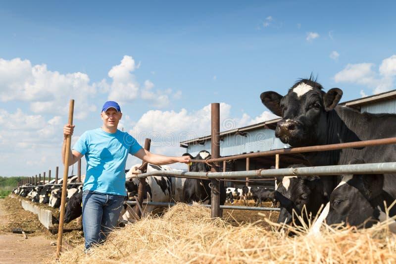 Mensenlandbouwer die aan landbouwbedrijf met melkkoeien werken stock fotografie