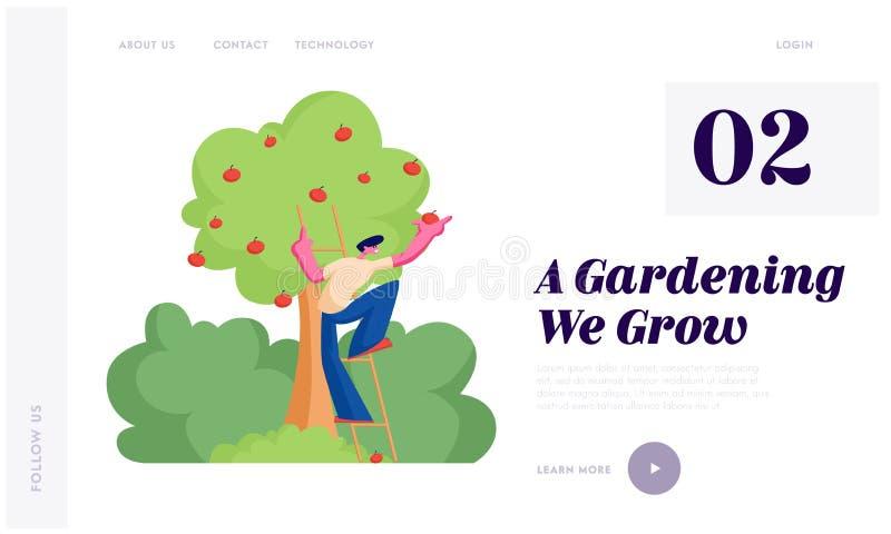 Mensenlandbouwer Pick Apples aan Mand De mannelijke Vruchten van Tuinmancharacter harvesting ripe van Organische Boom in Tuin, Ge vector illustratie