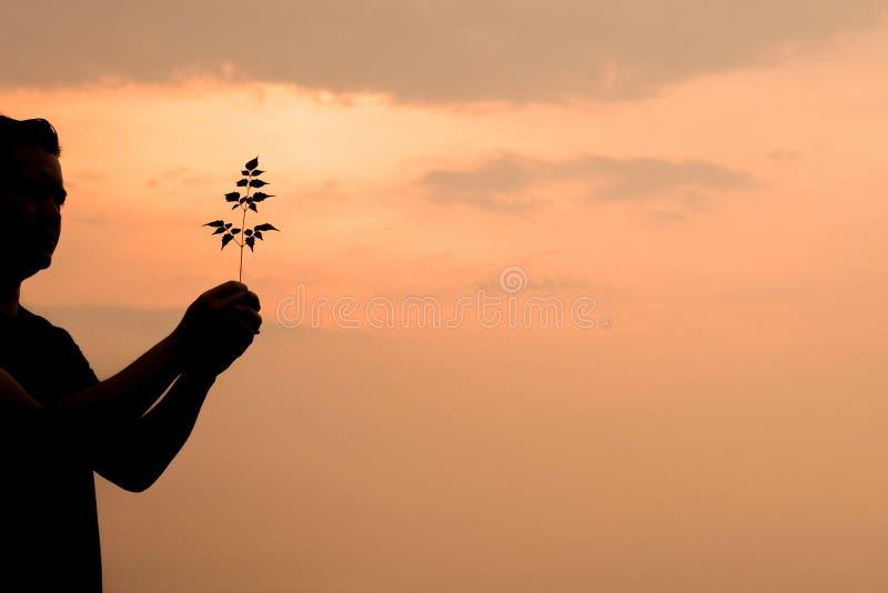 Mensensilhouet die een boom houden stock foto
