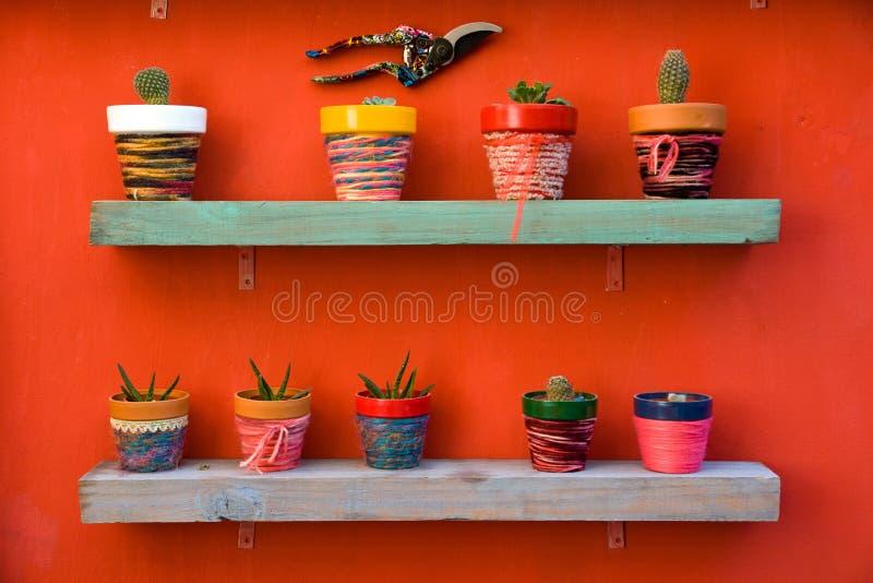 Mensola in pieno dei cactus immagine stock libera da diritti