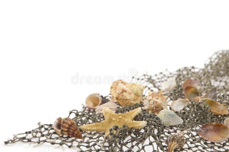 Mensonge d'étoiles de mer et de coquilles de coque sur un filet de pêche photographie stock