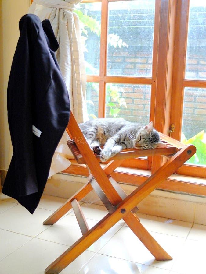 Mensonge en difficulté de chat sur la chaise en bois photo stock
