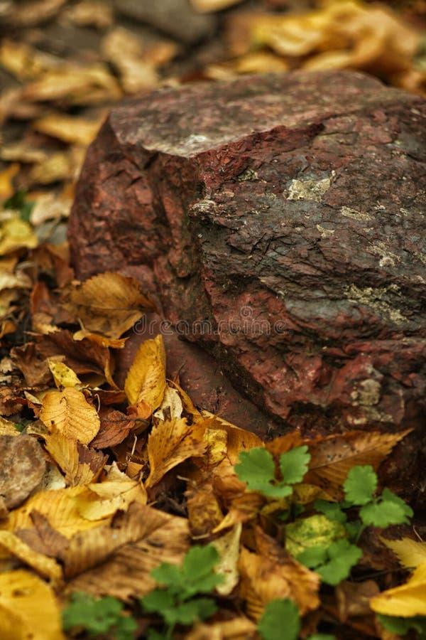 Mensonge en pierre rouge au sol, étendu par des feuilles d'automne photos libres de droits