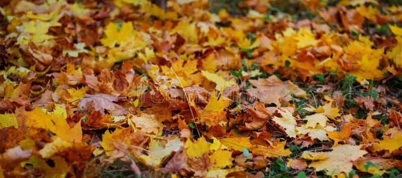 Mensonge tombé de feuilles d'automne au sol photographie stock libre de droits
