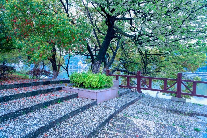 Mensonge tombé de pétales à profusion-Nan-Tchang Mei Lake Scenic Area image stock