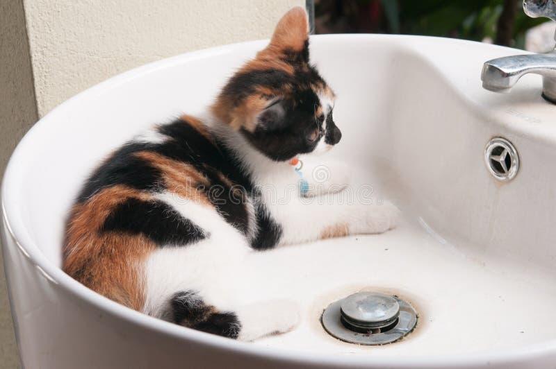 Mensonges de chat tigré image libre de droits