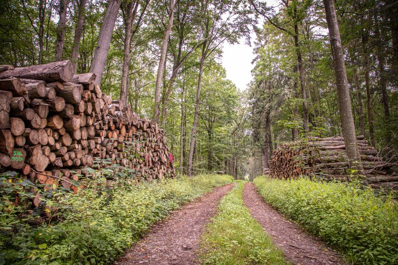 mensonges en bois dans de grandes piles sur à gauche et à droite d'un chemin forestier photographie stock libre de droits