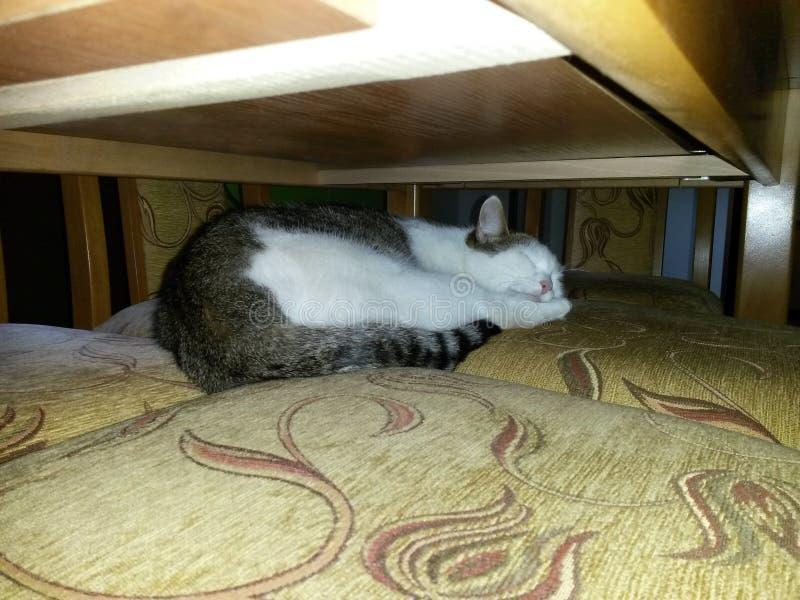 Mensonges et sommeils tigrés blancs de chat sur la chaise sous la table photographie stock libre de droits