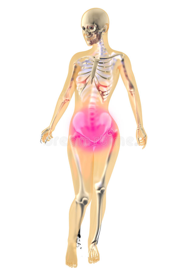 Menstrual ból - żeńska anatomia ilustracji