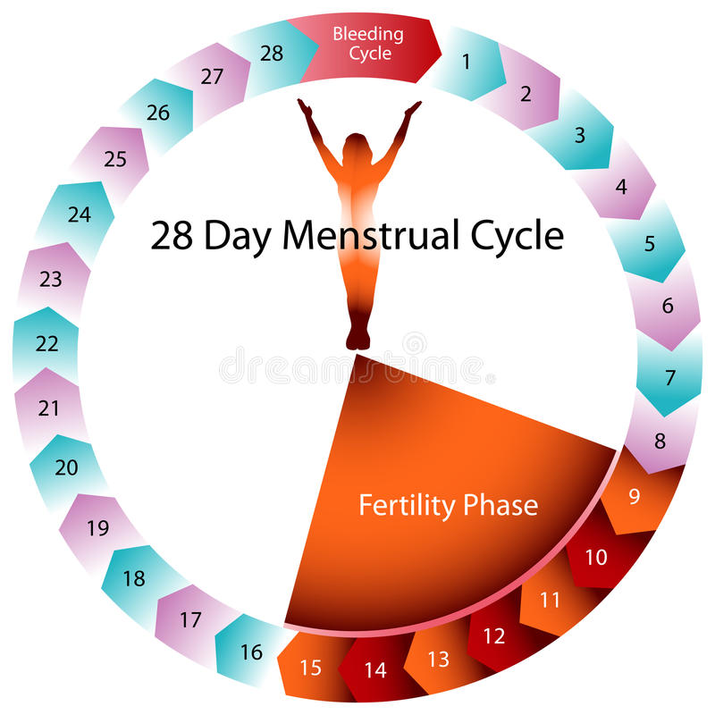 Menstrual Cycle Fertility Chart stock illustration