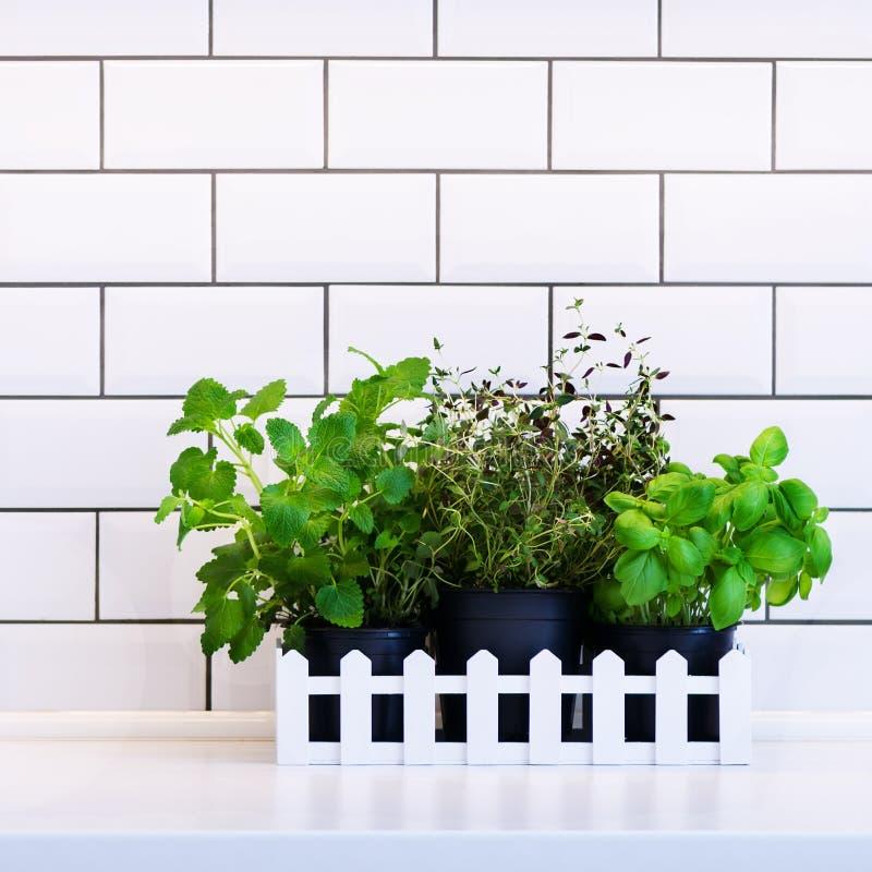 Menta, tomillo, albahaca, perejil - hierbas aromáticas de la cocina en el cajón de madera blanco en la tabla de cocina, fondo de  imagenes de archivo
