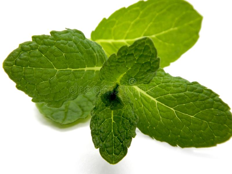 Mint against a white background royalty free stock image