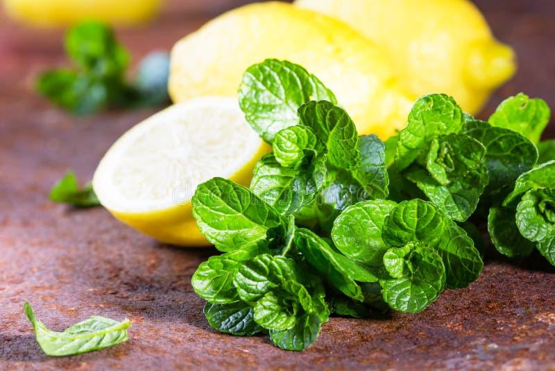 Menthe fraîche avec le citron Ingrédients pour le mohito ou la limonade photographie stock libre de droits