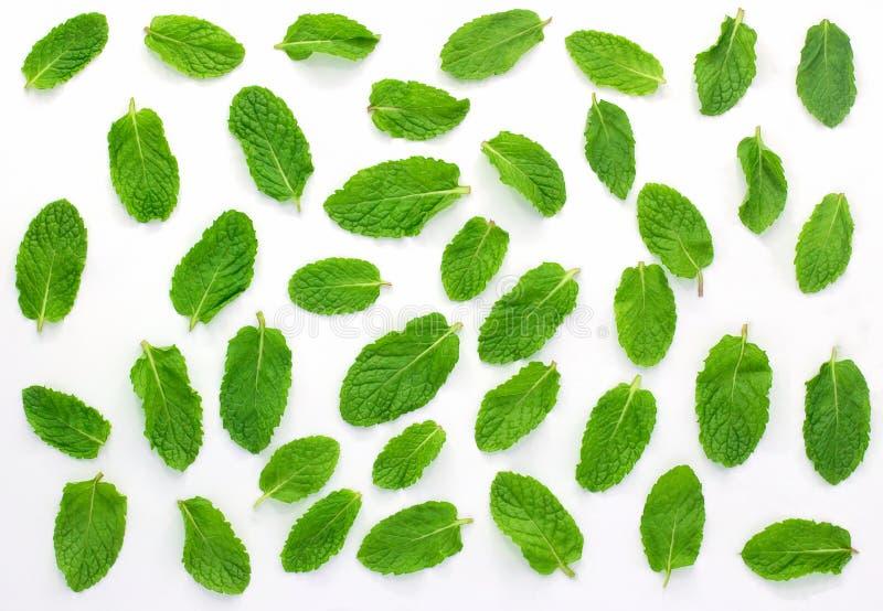 Menthe fraîche d'isolement sur le fond blanc Placez, des feuilles image stock
