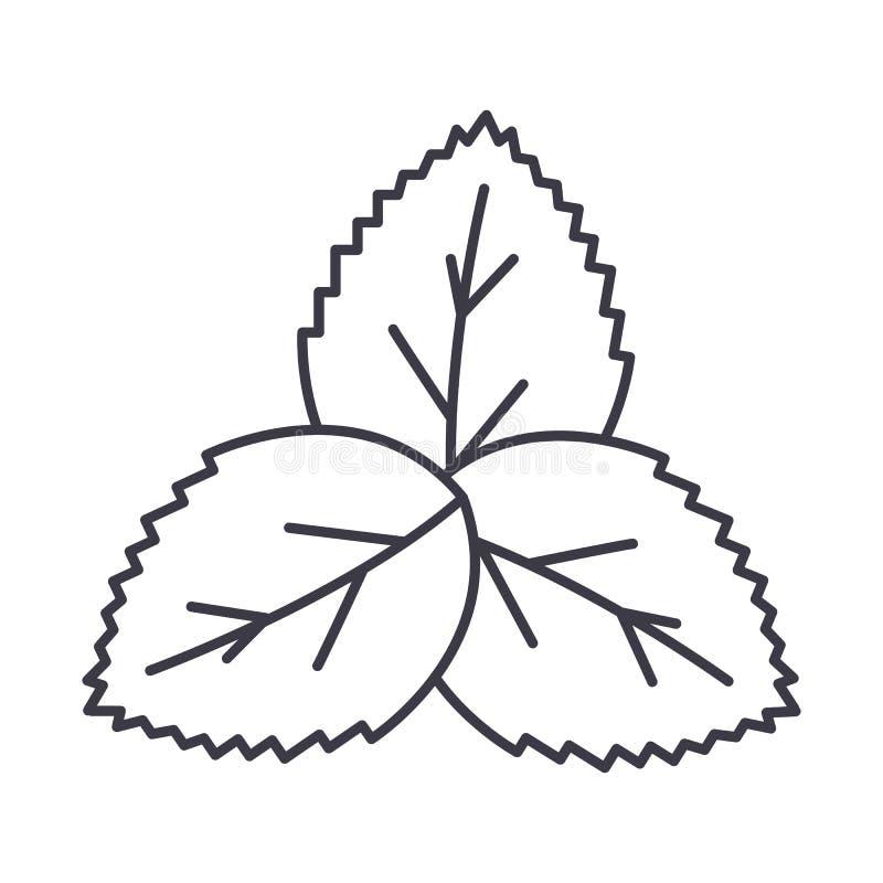 Menthe, ligne icône, signe, illustration de vecteur de salade verte sur le fond, courses editable illustration libre de droits