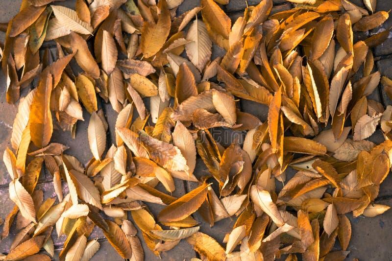 Mentira amarilla caida hermosa de las hojas de otoño en la acera imagen de archivo libre de regalías
