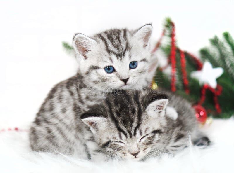 Mentira de dos gatitos debajo del árbol de navidad imagenes de archivo