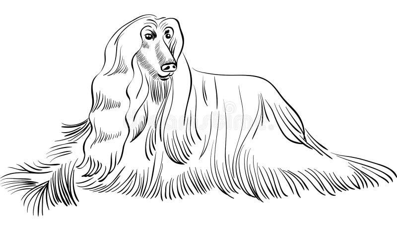 Mentira de la casta del afgano del perro del bosquejo stock de ilustración