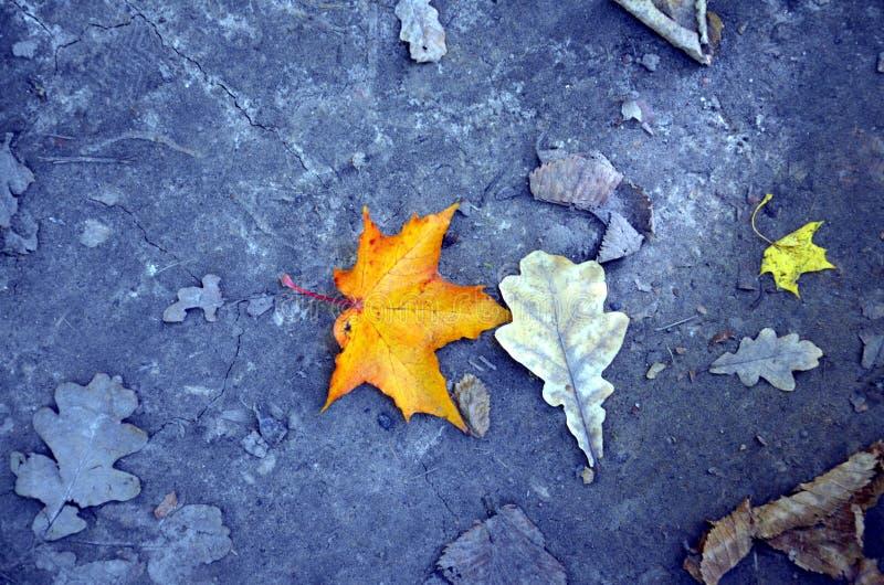 Mentira de las hojas de otoño en la tierra imagenes de archivo