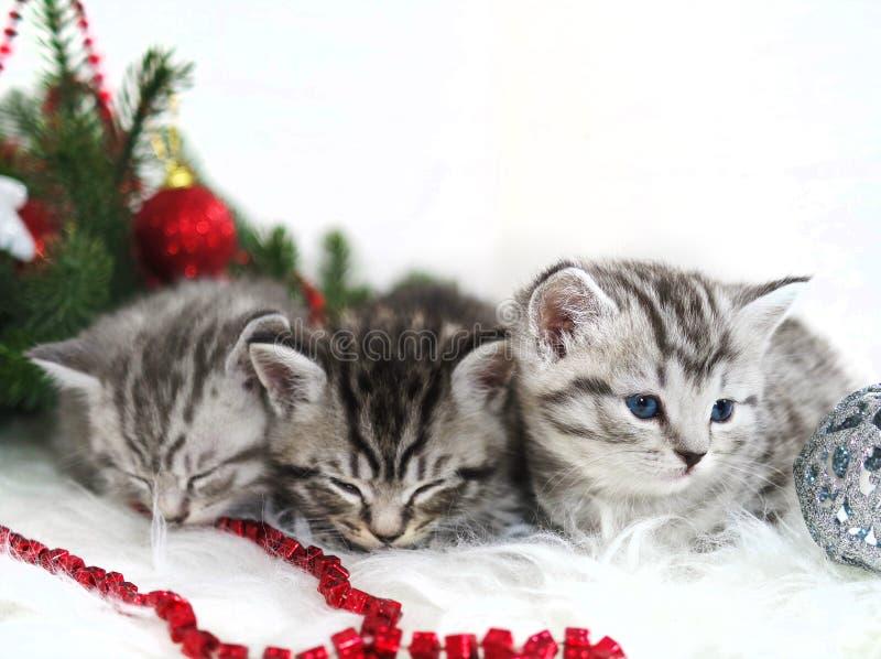 Mentira de los gatitos debajo del árbol de navidad fotografía de archivo libre de regalías