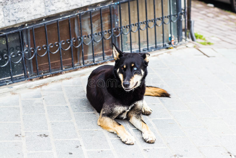 Mentira del perro de la calle imagen de archivo libre de regalías