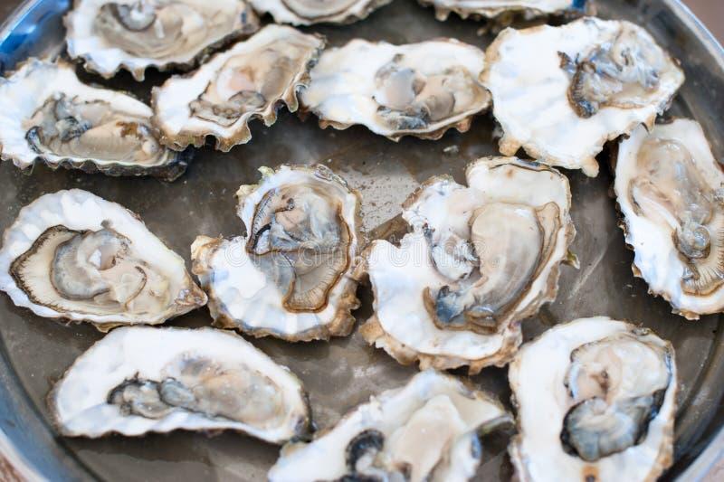 Mentira fresca das ostras em uma bandeja fotografia de stock royalty free